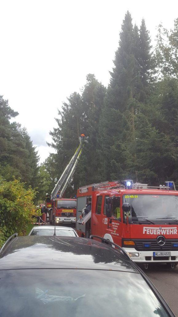 Holm-Seppensen: Baum droht auf Straße zu fallen