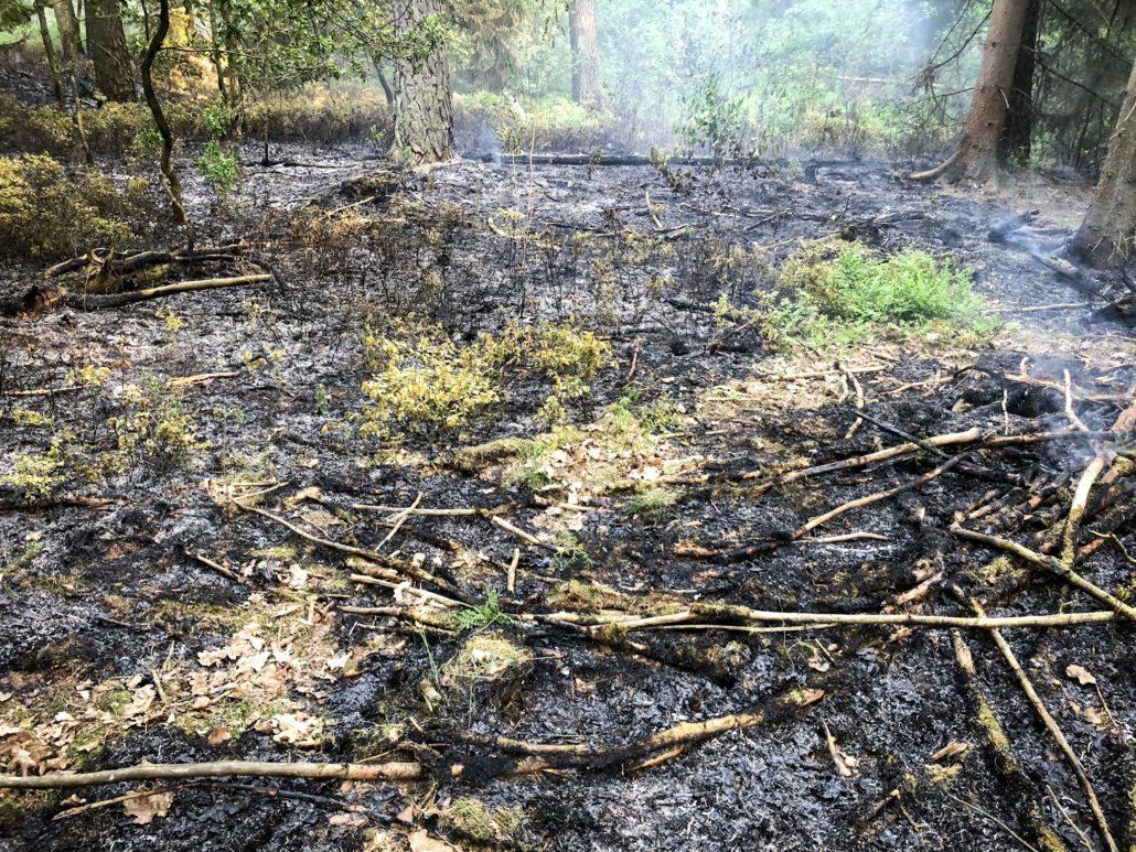 Brennt Wald in Holm-Seppensen